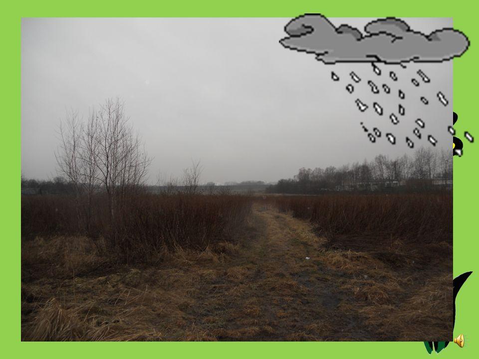 Godzina: 7.30 Temperatura [oC]: 5 Ciśnienie [hPa]: 1012,25 Stan pogody: zachmurzenie i opady Wiatr [km/s]: 23.5 Opady: deszcz 0,0-3 mm/12 h